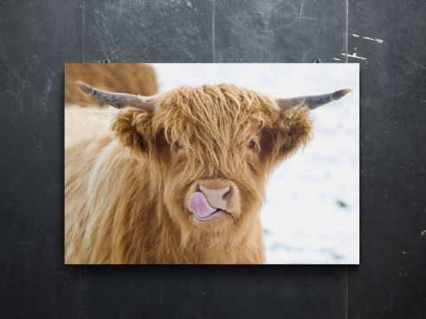 Licky Cow Highland Cow Premium Canvas Print